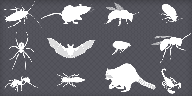 Pests-Collage